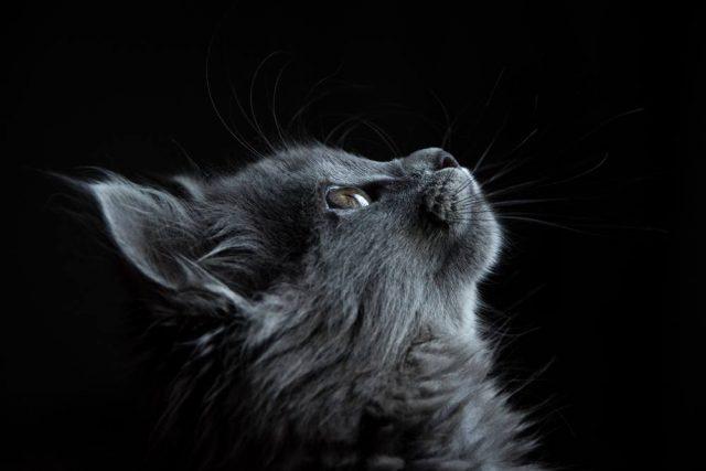 Kattpensionat är ett bra val