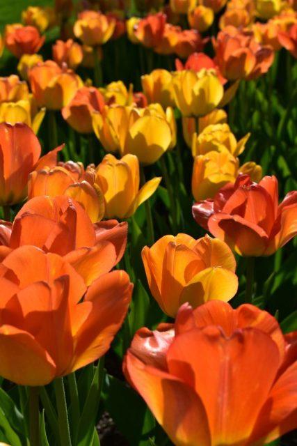 Blommor och gröna växter